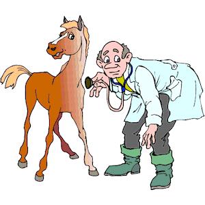 horse-vet